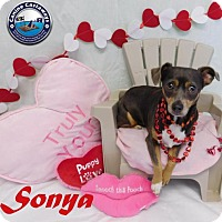 Adopt A Pet :: Sonya - Arcadia, FL