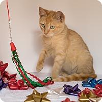Adopt A Pet :: Dobby - Houston, TX