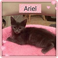 Adopt A Pet :: ARIEL - Hamilton, NJ