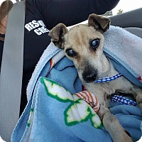 Adopt A Pet :: Mia - Ft. Lauderdale, FL