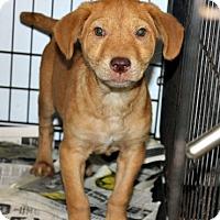 Adopt A Pet :: Sonny - Philadelphia, PA