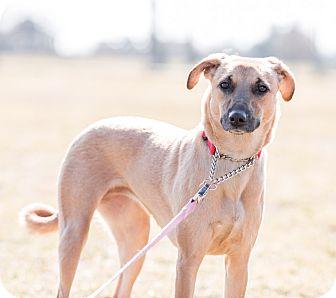 Hound (Unknown Type) Dog for adoption in Enfield, Connecticut - Vodka*URGENT*