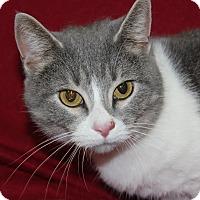 Adopt A Pet :: ARIELLA - Danville, IL