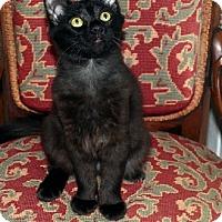 Adopt A Pet :: Charlotte - Fullerton, CA