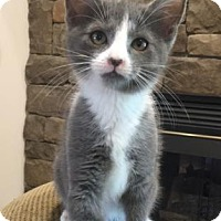 Adopt A Pet :: Abbott - Lexington, NC