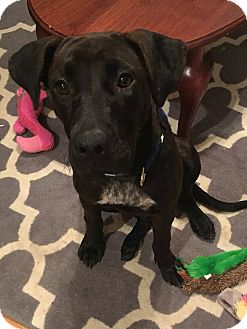 Labrador Retriever Mix Dog for adoption in Huntsville, Alabama - Ruthie Jane