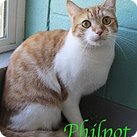 Adopt A Pet :: Philpot - Bradenton, FL
