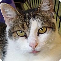 Adopt A Pet :: Paco - Sprakers, NY