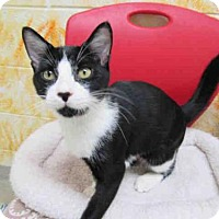 Adopt A Pet :: TUX - Vero Beach, FL