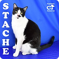 Adopt A Pet :: Stache - Carencro, LA