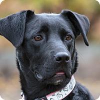 Adopt A Pet :: ELSA - Ile-Perrot, QC
