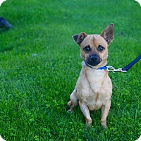 Adopt A Pet :: CASPER - Phoenix, AZ