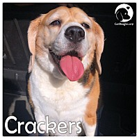 Adopt A Pet :: Crackers - Pittsburgh, PA