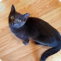 Adopt A Pet :: Prince William - Tampa, FL