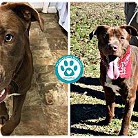 Adopt A Pet :: Bayard - Kimberton, PA