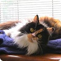 Adopt A Pet :: Tiger Lily - Davis, CA