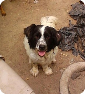 Kenny | Adopted Dog | Crosby, TX | Basset Hound/Border ...