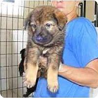 Adopt A Pet :: Brix - Alexandria, VA