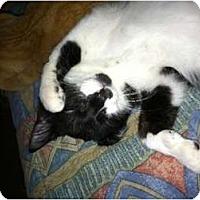 Adopt A Pet :: Marlowe - Brea, CA