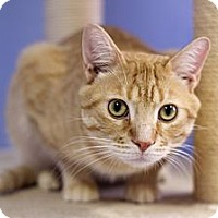 Adopt A Pet :: Caraway - Chicago, IL
