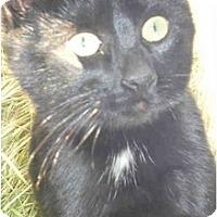 Adopt A Pet :: Calypso - Strathmore, AB