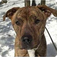 Adopt A Pet :: Jake - Chicago, IL