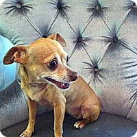 Adopt A Pet :: Miss Molly - Los Angeles, CA