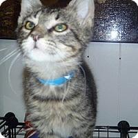 Adopt A Pet :: Splinter - Hamburg, NY