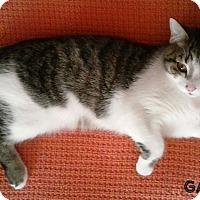 Adopt A Pet :: Gabriel - Covington, KY