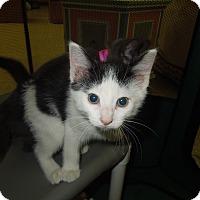 Adopt A Pet :: Nate - Medina, OH