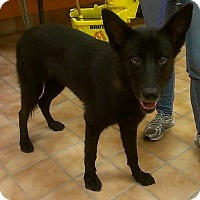 Adopt A Pet :: Rozlyn - Quincy, IN
