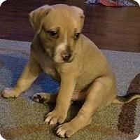 Adopt A Pet :: Wyatt Earp - Gainesville, FL
