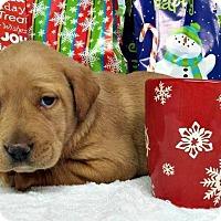 Adopt A Pet :: Trey - Kimberton, PA