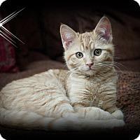 Adopt A Pet :: Maz - Mt. Prospect, IL