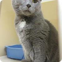 Adopt A Pet :: Sugar B  $20 - Lincolnton, NC