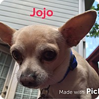 Adopt A Pet :: JoJo - Knoxville, TN