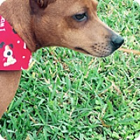 Adopt A Pet :: Sunshine - Jupiter, FL