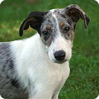 Adopt A Pet :: COME MEET Cooper - Westport, CT