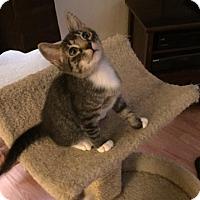 Adopt A Pet :: MAX - Glendale, AZ