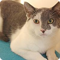 Adopt A Pet :: Leonardo DiCatrio - Harrisonburg, VA