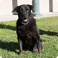 Adopt A Pet :: Polly - Folsom, LA