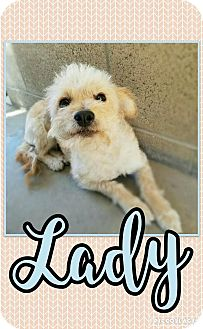Terrier (Unknown Type, Medium) Mix Dog for adoption in Edwards AFB, California - Lady