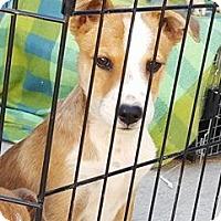 Adopt A Pet :: Nanche ARRIVES DEC 3RD - cupertino, CA