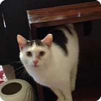 Adopt A Pet :: Karli - millville, NJ