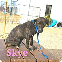 Adopt A Pet :: Skye - California City, CA
