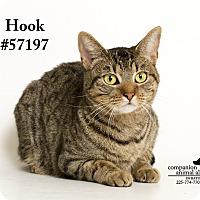 Adopt A Pet :: Hook - Baton Rouge, LA