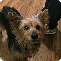 Adopt A Pet :: Donnie - Wichita, KS