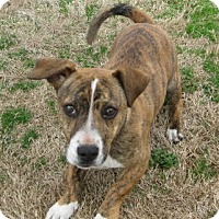 Adopt A Pet :: Mellie - Huntsville, AL
