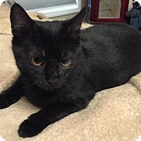 Adopt A Pet :: Galaxy - Cincinnati, OH