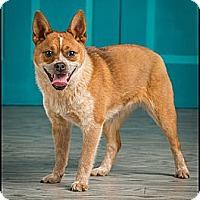Adopt A Pet :: Pebbles - Owensboro, KY